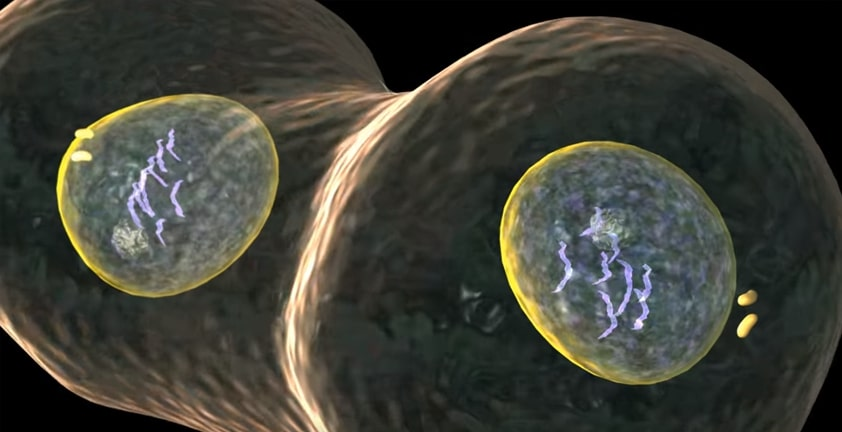 Mitosis 3D Animation