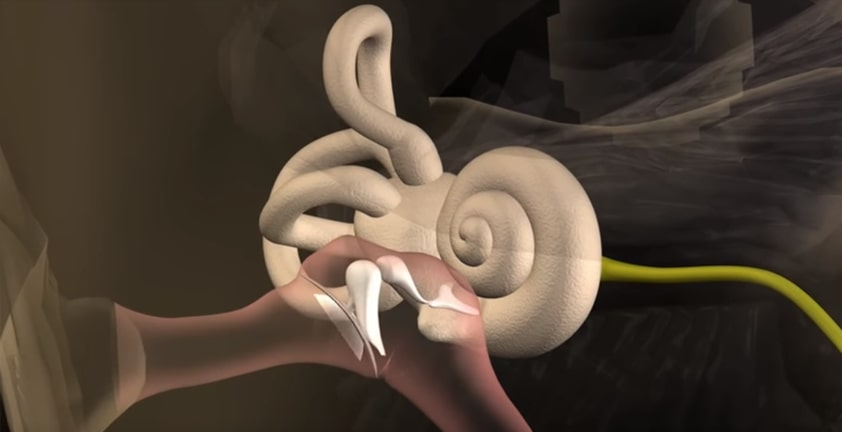 Ear Canal Medical Visualization