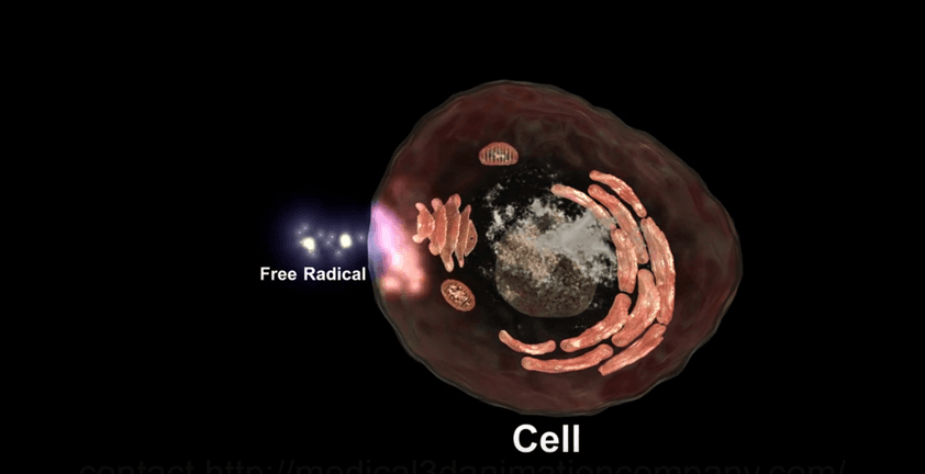 Free Radical Antioxidant 3D Medical Visualization
