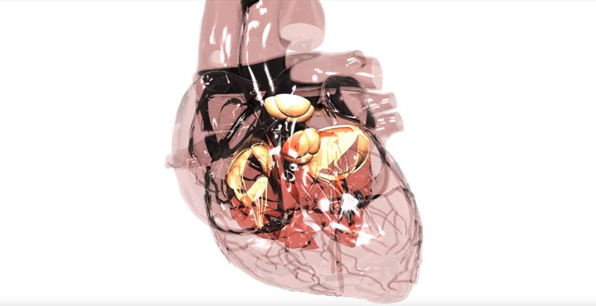 Transparent 3D Animated Heart Valve